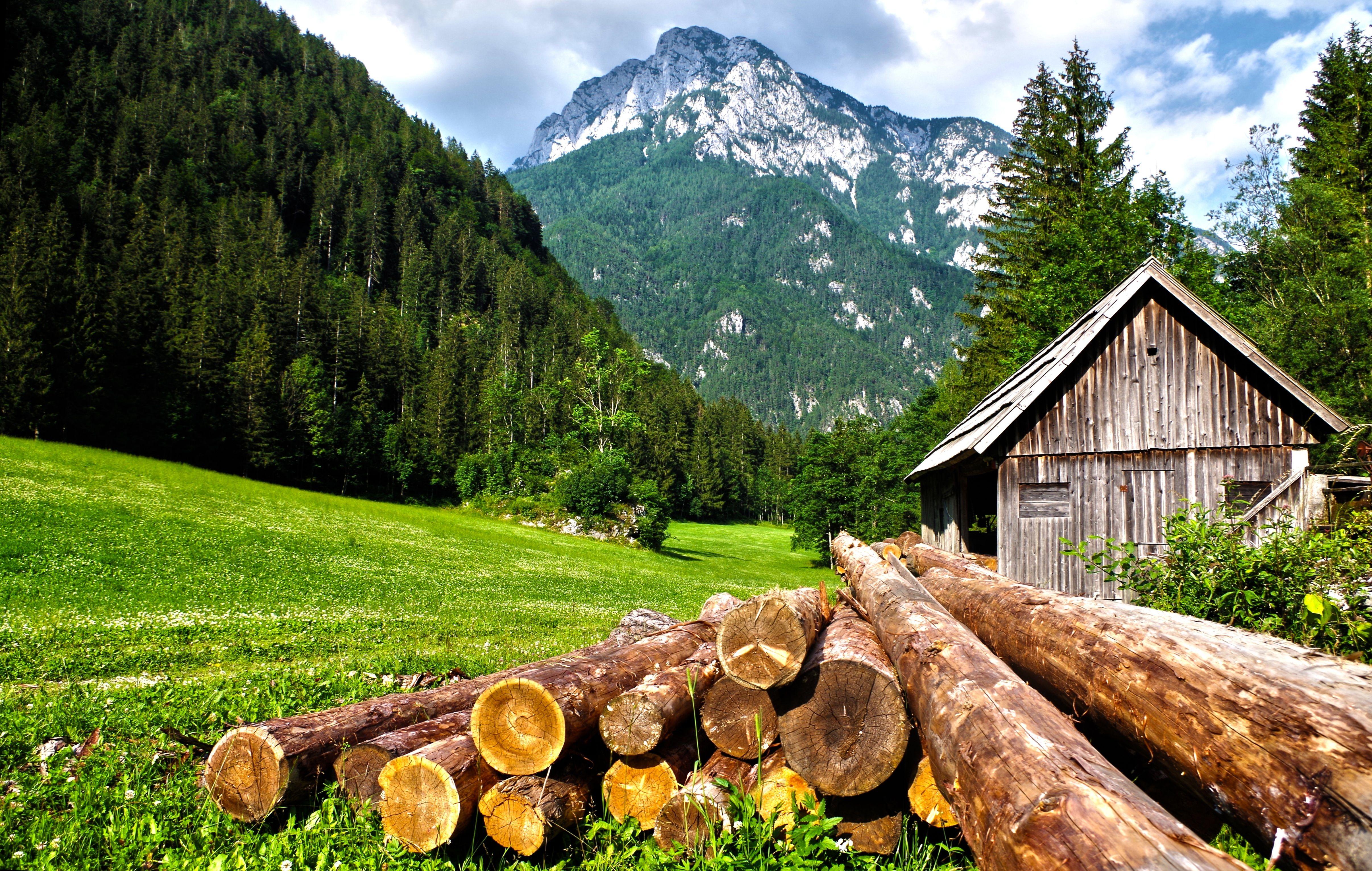 Medis gamtoje